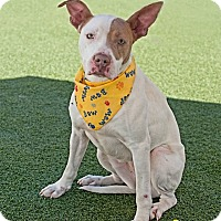 Bull Terrier Mix Dog for adoption in Salisbury, North Carolina - Rainey