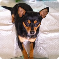 Adopt A Pet :: Paco - Waller, TX