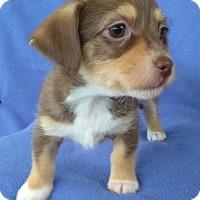 Adopt A Pet :: Delta - Lawrenceville, GA