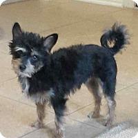 Adopt A Pet :: Trooper - Conroe, TX