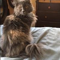 Adopt A Pet :: JEWEL - Washington, NC