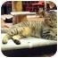 Photo 4 - Domestic Shorthair Cat for adoption in Centerburg, Ohio - Meesa