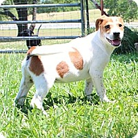 Adopt A Pet :: Journey - Allentown, PA