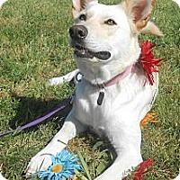 Adopt A Pet :: Rose - Lockhart, TX