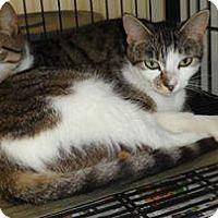 Adopt A Pet :: Cammie & Tammie - Chesapeake, VA