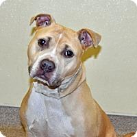 Adopt A Pet :: Fern - Port Washington, NY