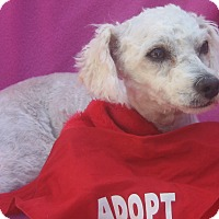 Adopt A Pet :: Pumpkin-WATCH MY VIDEO!! - Irvine, CA
