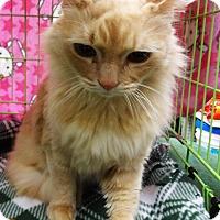 Adopt A Pet :: Orion - N. Billerica, MA