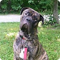 Adopt A Pet :: Onimaus - Virginia Beach, VA