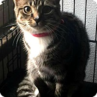 Adopt A Pet :: Raven - Jefferson, NC