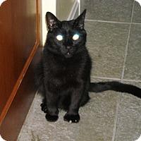 Adopt A Pet :: Shelby - Riverside, RI