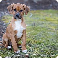 Adopt A Pet :: Zeki - Waldorf, MD