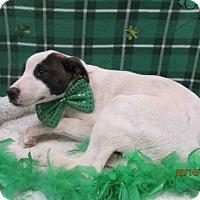 Adopt A Pet :: A079083 - Grovetown, GA