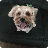 Adopt A Pet :: Cubbie D3565 - Shakopee, MN