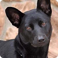 Adopt A Pet :: Melody von Mosbach - Los Angeles, CA