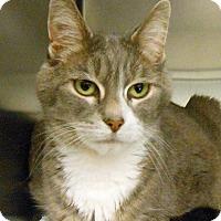 Adopt A Pet :: Mamma - Lancaster, PA