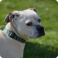 Adopt A Pet :: Niles - WESTMINSTER, MD