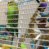 Adopt A Pet :: Gerry - Punta Gorda, FL