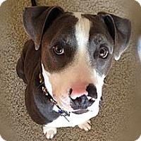 Adopt A Pet :: Comet - La Habra, CA