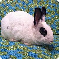 Adopt A Pet :: Flavia - Williston, FL
