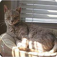 Adopt A Pet :: Cliff - bloomfield, NJ