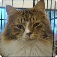 Adopt A Pet :: Cinderfella - Muncie, IN