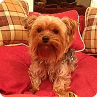 Adopt A Pet :: Colton - Cleveland, OH
