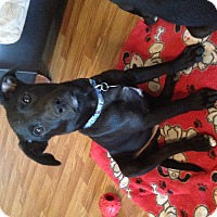 Adopt A Pet :: Luka - Homewood, AL