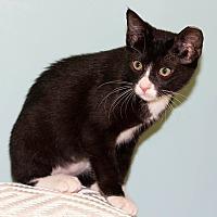 Adopt A Pet :: Elisa - Dallas, TX