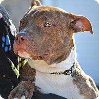 Adopt A Pet :: Deuce - Reisterstown, MD