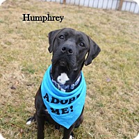 Adopt A Pet :: Humphrey - Independence, MO