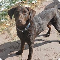 Adopt A Pet :: Hazel - Denver, CO