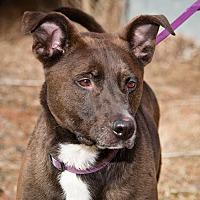 Adopt A Pet :: Bruiser - Palmyra, NE