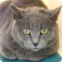 Adopt A Pet :: Semilla - Harrisonburg, VA