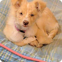 Adopt A Pet :: Noey - Billings, MT
