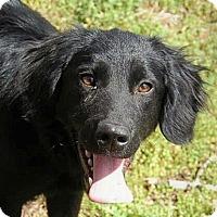 Adopt A Pet :: Sugar - Harrisonburg, VA