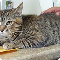 Adopt A Pet :: Candy - Englewood, FL