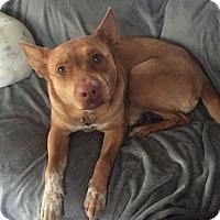 Adopt A Pet :: Estrella - Manhattan, KS