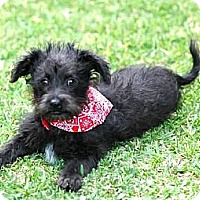 Adopt A Pet :: Flynn - La Habra Heights, CA
