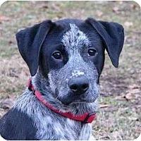 Adopt A Pet :: Butler - Mocksville, NC