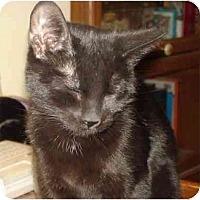Adopt A Pet :: Lucy - Chesapeake, VA