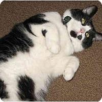 Adopt A Pet :: Ricky - Cincinnati, OH