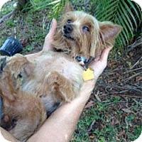 Adopt A Pet :: Cashew - Homestead, FL