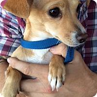 Adopt A Pet :: Peanut - Sun Valley, CA