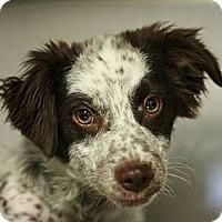 Adopt A Pet :: Maddy - Canoga Park, CA