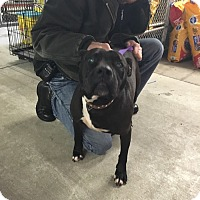 Adopt A Pet :: *Courtesy Post* Trinity - Peoria, IL