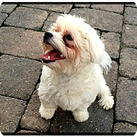 Adopt A Pet :: Sullivan - Hixson, TN