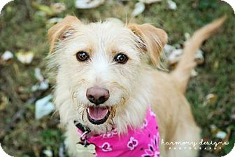 Terrier (Unknown Type, Medium) Mix Dog for adoption in Nashville, Tennessee - Ellie