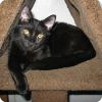 Adopt A Pet :: Noelle - Powell, OH