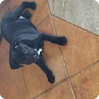 Adopt A Pet :: Noel - Von Ormy, TX